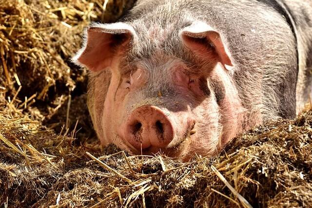 Expresiones Coloquiales - Mein Schwein pfeifft