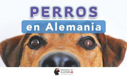 Los perros en Alemania
