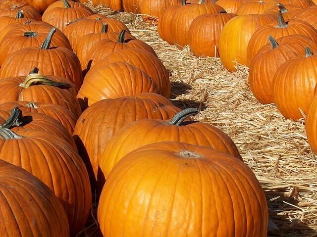 septiembre en Alemania Pumpkin Festival